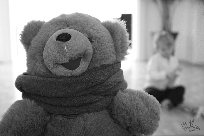 Teddy � Webalistic Photo