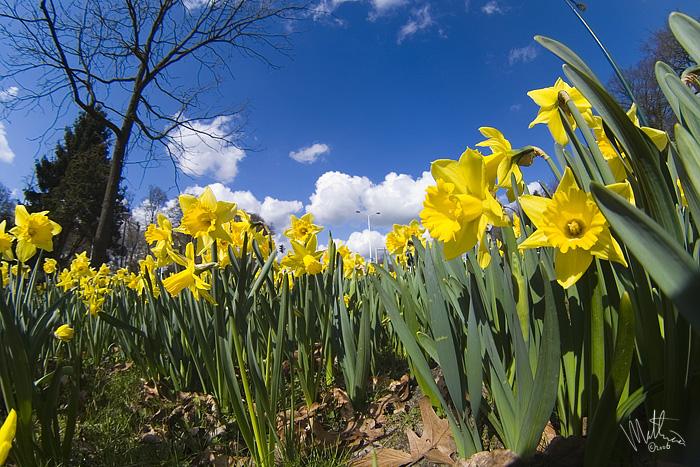 Spring 2 � Webalistic Photo