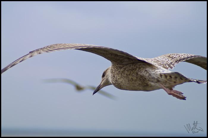 Wings � Webalistic Photo