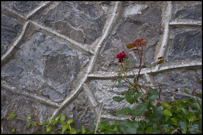 Wallflower � Webalistic Photo
