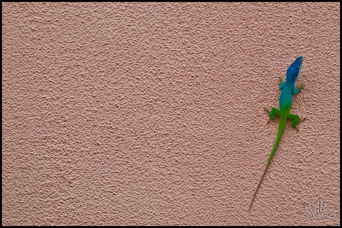 Camouflage? � Webalistic Photo